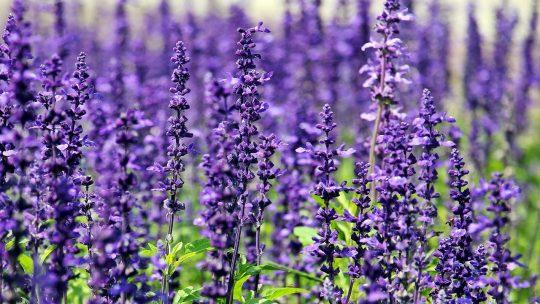 Comment garder son jardin beau et charmant sans grand entretien?