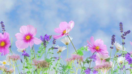 Quelques plantes que vous pouvez faire pousser chez vous