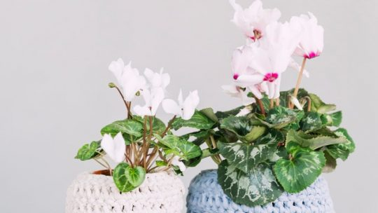 Idée de personnalisation des pots de fleurs