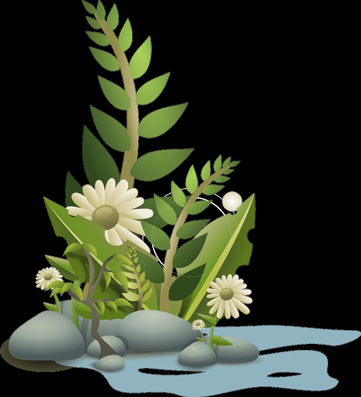 Les plantes de jardin