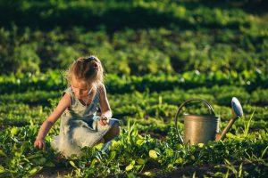 jardin-entretenu