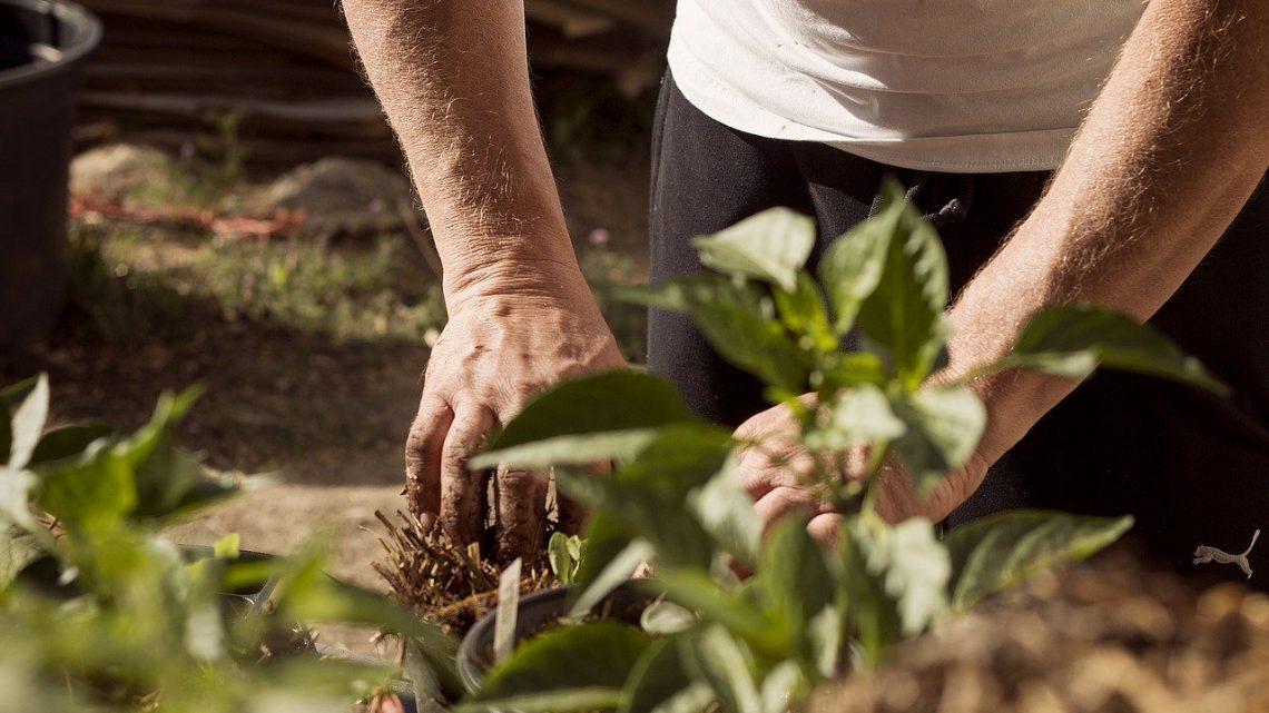 Quel est l'essentiel dans la réalisation de son premier jardin?