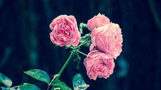 Entretien du jardin : ce qu'il faut éviter de faire